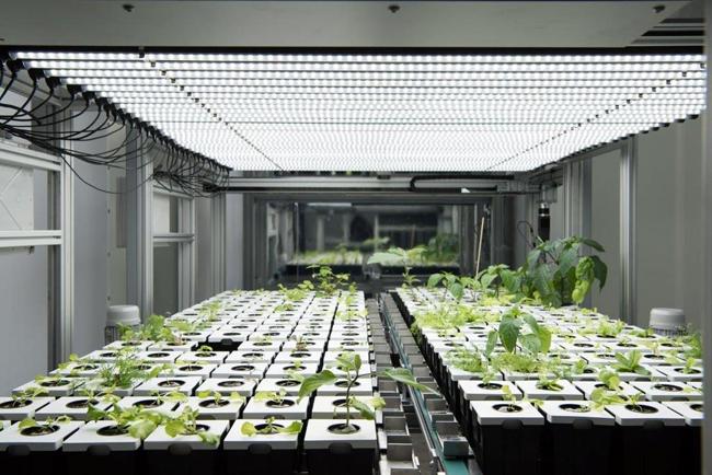 Atos lanza el primer proyecto de agricultura urbana digital en vertical del mundo